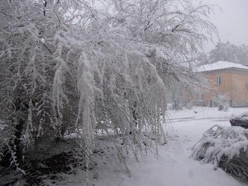 http://pelih-ev.narod.ru/x-images/snow/DSCN0787_m.JPG